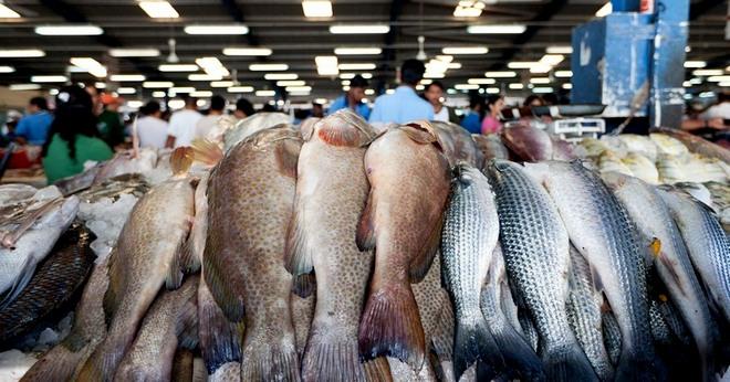 выбор рыбы для балыка