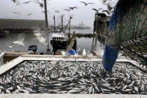 Заключение договора с рыболовным хозяйством