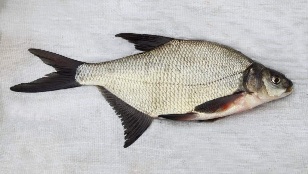 Выбираем рыбу для копчения