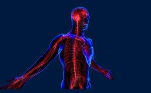 Оказывает положительное влияние на нервную систему