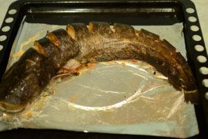 змееголова рыба