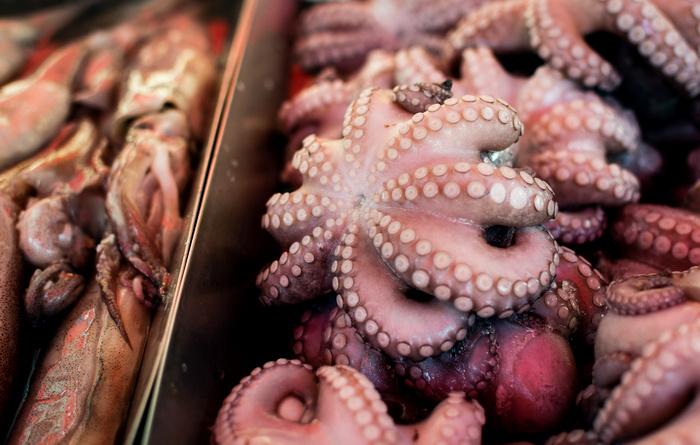 покупка осьминога